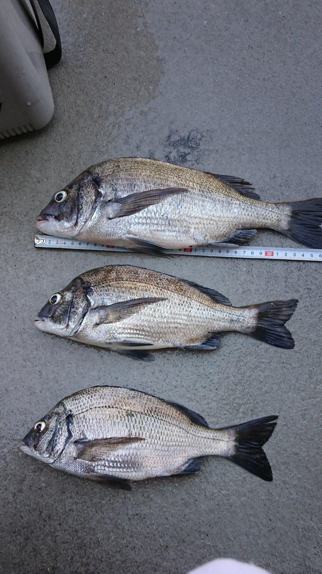 一仁さんの投稿画像,写っている魚はクロダイ
