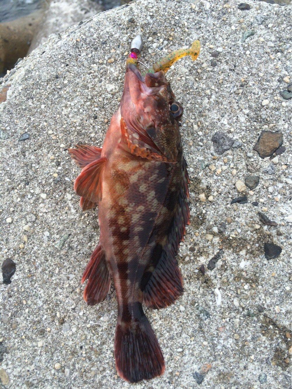 atsushiさんの投稿画像,写っている魚は