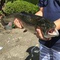 せいたドットコムさんの福島県白河市での釣果写真