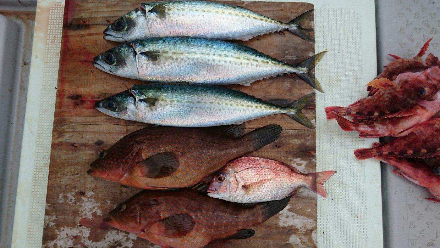 ツカサさんの投稿画像,写っている魚はアコウダイ