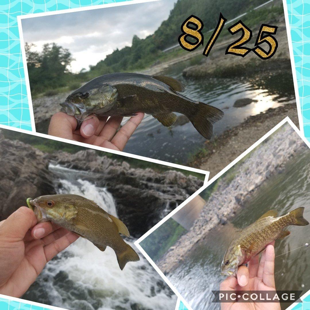 ニコさんの投稿画像,写っている魚はスモールマウスバス