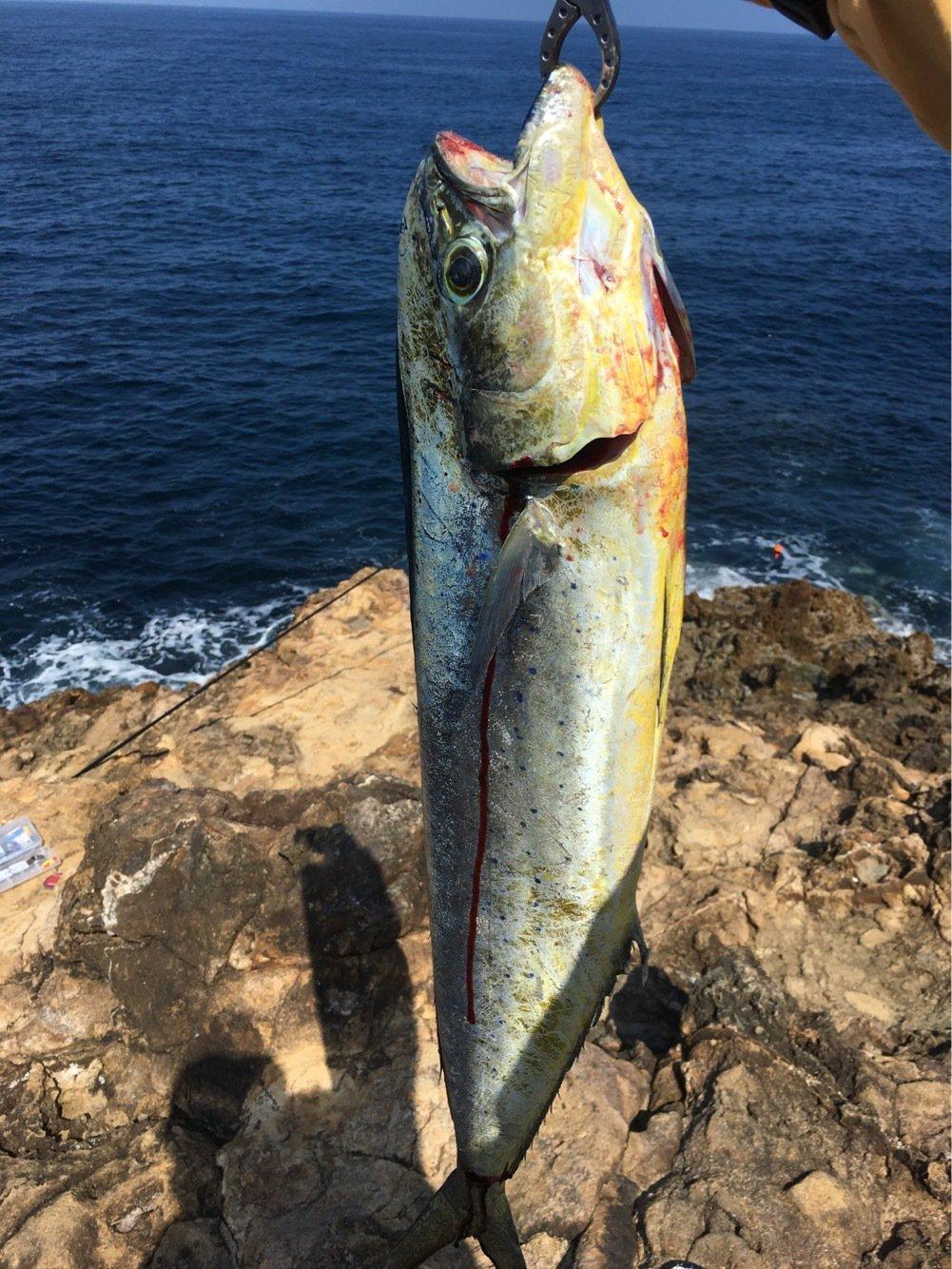 tsurikichigopeiさんの投稿画像,写っている魚はシイラ
