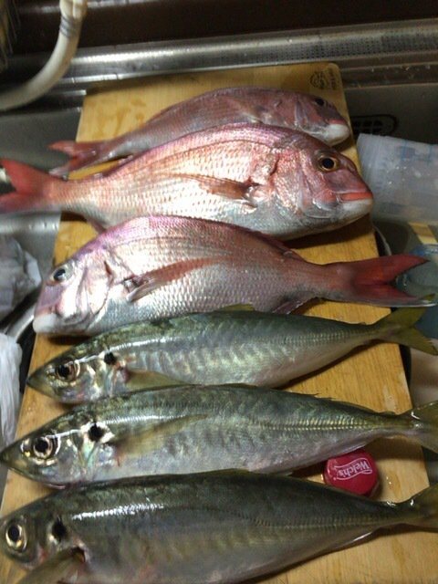 mkey928さんの投稿画像,写っている魚はマダイ