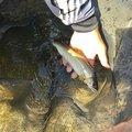 イカ娘さんの山形県米沢市での釣果写真