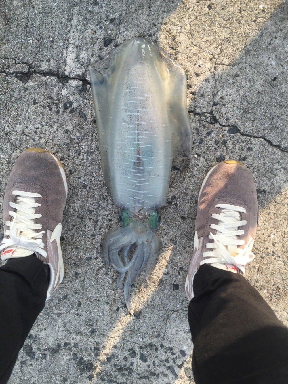 クマンドさんの投稿画像,写っている魚はアオリイカ