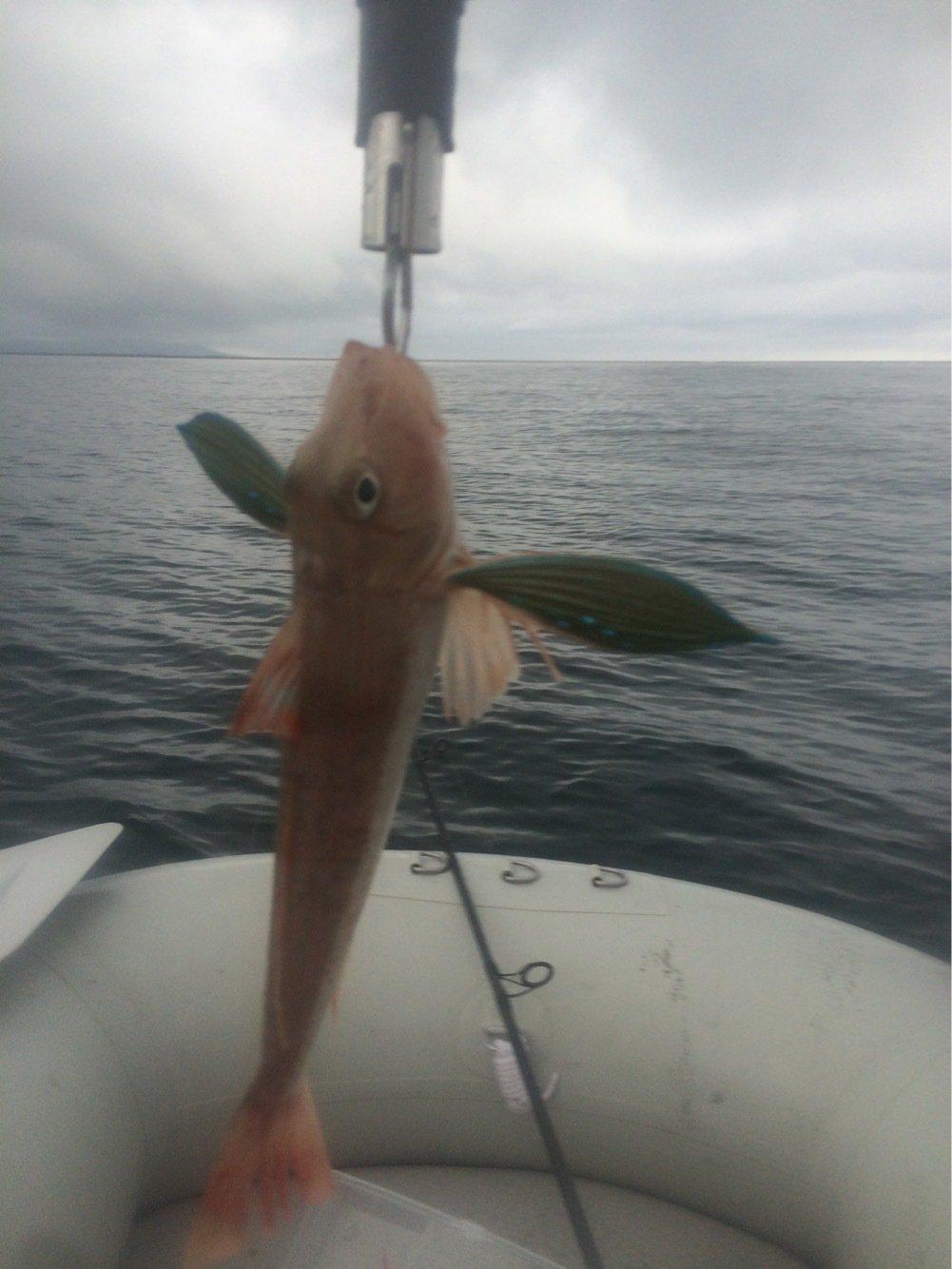 Furious Templarさんの投稿画像,写っている魚はホウボウ