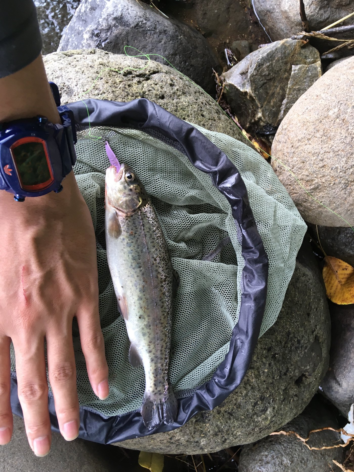 Se-yamadaさんの投稿画像,写っている魚はニジマス
