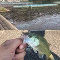 たくさんの山梨県上野原市での釣果写真