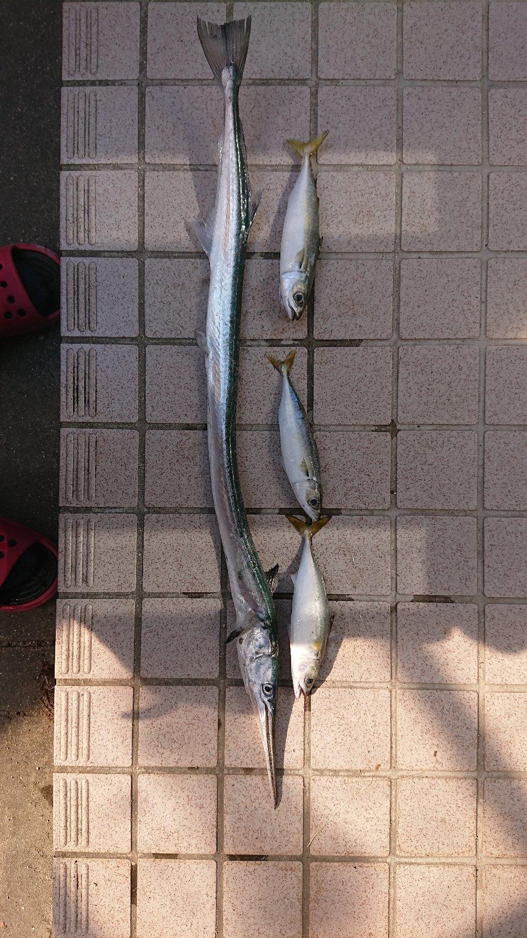タカナリさんの投稿画像,写っている魚はダツ,マサバ
