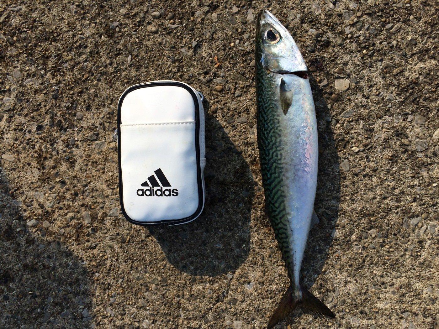 SKY-HIさんの投稿画像,写っている魚はマサバ