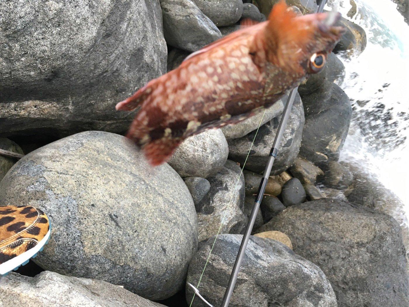 たけさんの投稿画像,写っている魚はカサゴ