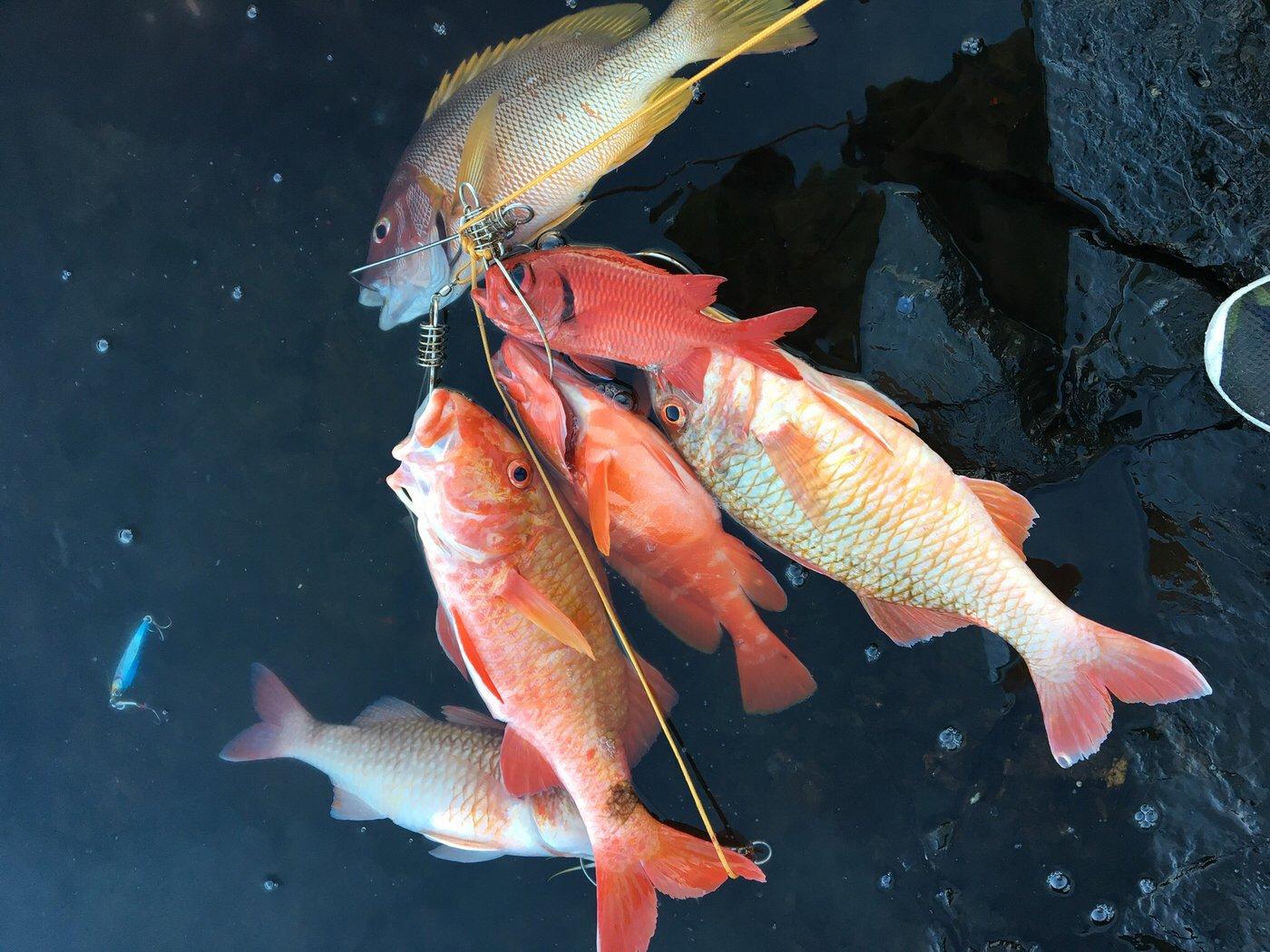 tkyさんの投稿画像,写っている魚はオキナヒメジ,オキフエダイ,アカハタ,ホウセキキントキ