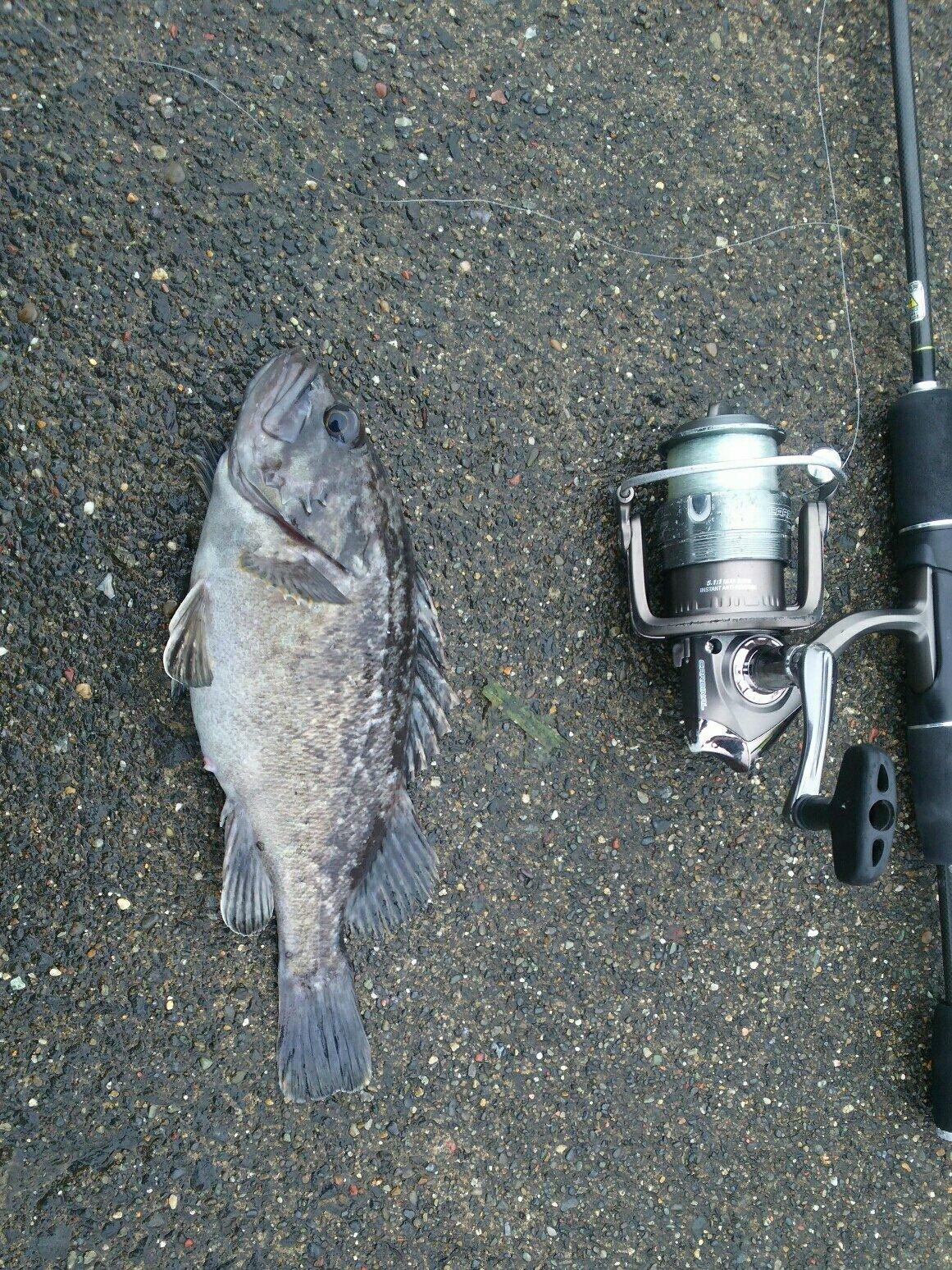 taitehuさんの投稿画像,写っている魚は