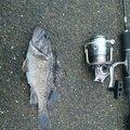 taitehuさんの北海道浦河郡での釣果写真