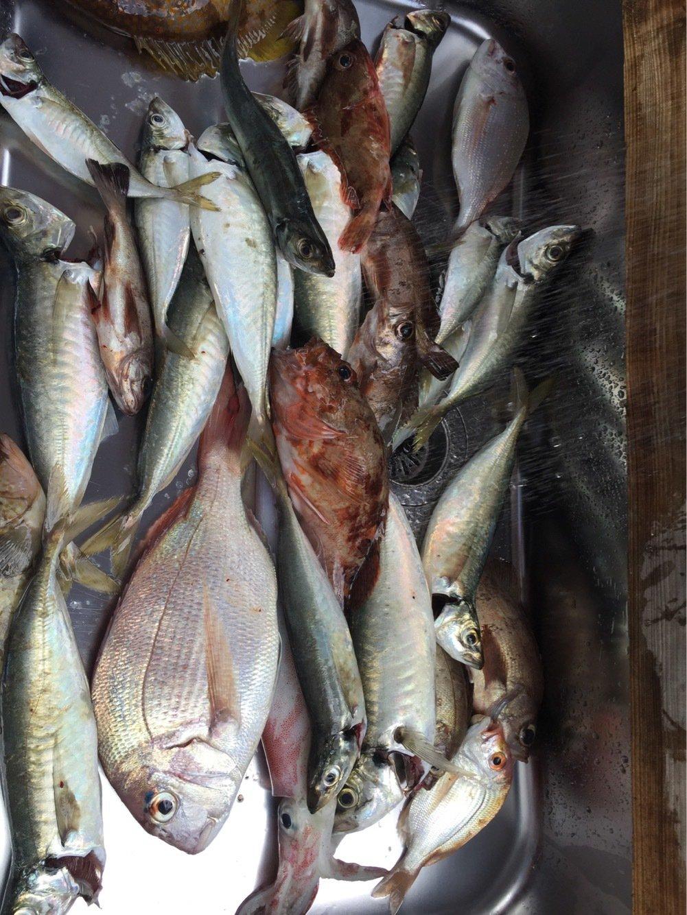ボタヤマさんの投稿画像,写っている魚は