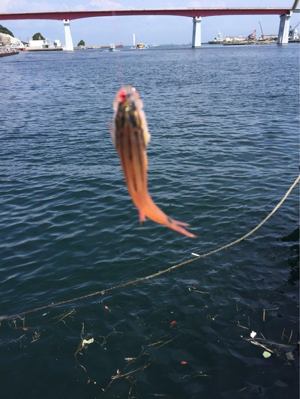 タロ吉三平さんの投稿画像,写っている魚は