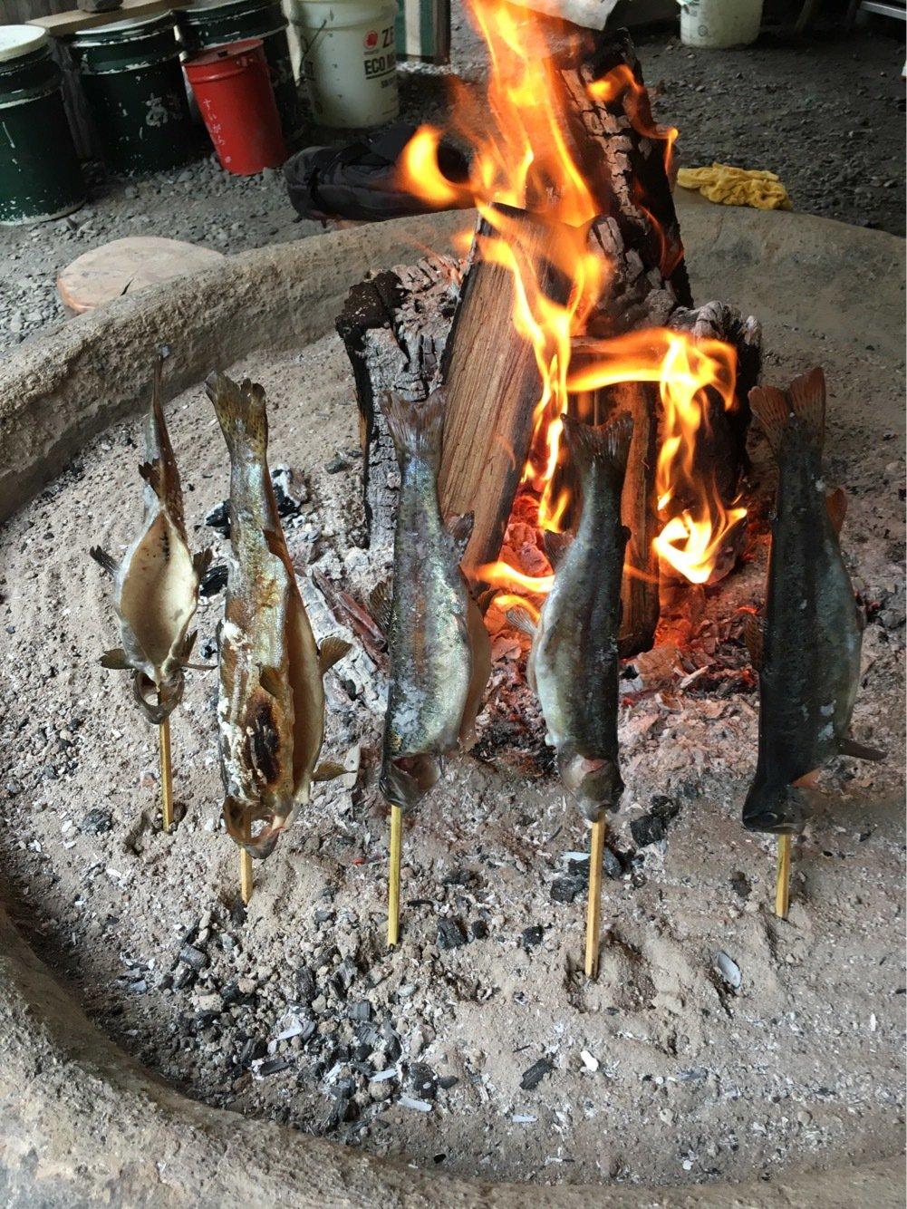 ぬこ好きさんの投稿画像,写っている魚はニジマス