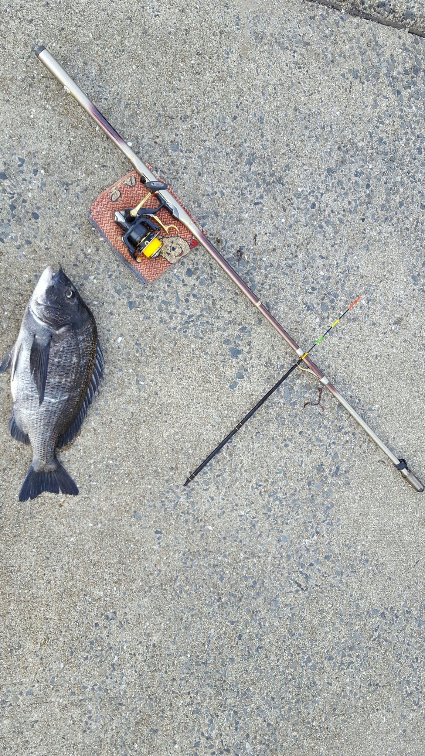 ミクロン( *¯ ꒳¯*)miさんの投稿画像,写っている魚はクロダイ