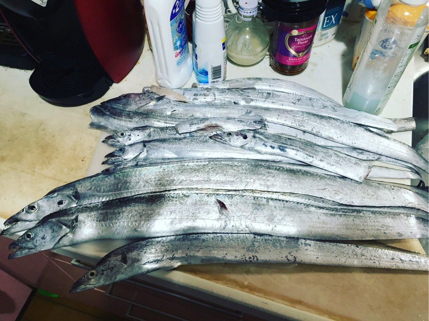 魚燻さんの投稿画像,写っている魚はタチウオ