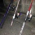 セフィア❤️さんの奈良県香芝市での釣果写真