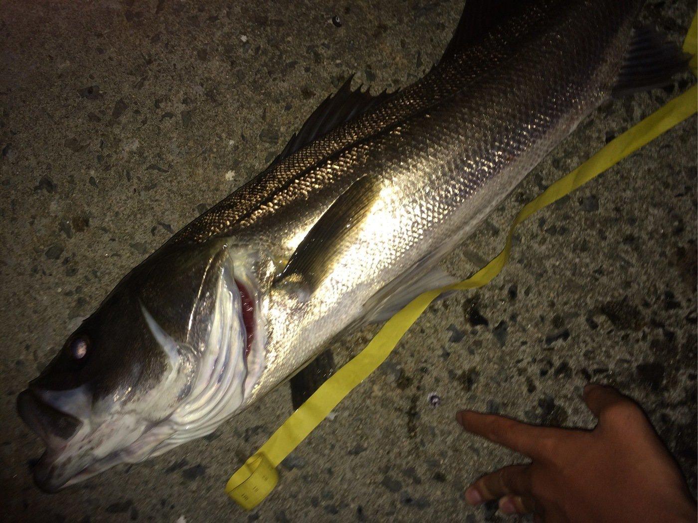 K さんの投稿画像,写っている魚はスズキ