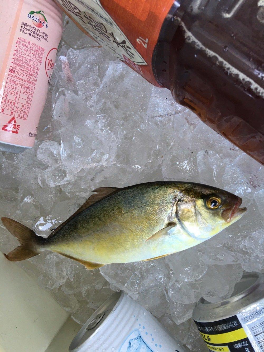 ゆうきちさんの投稿画像,写っている魚はカンパチ
