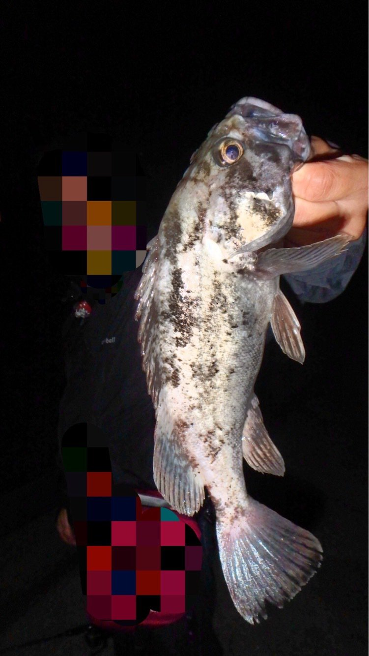 sugiさんの投稿画像,写っている魚はソイ