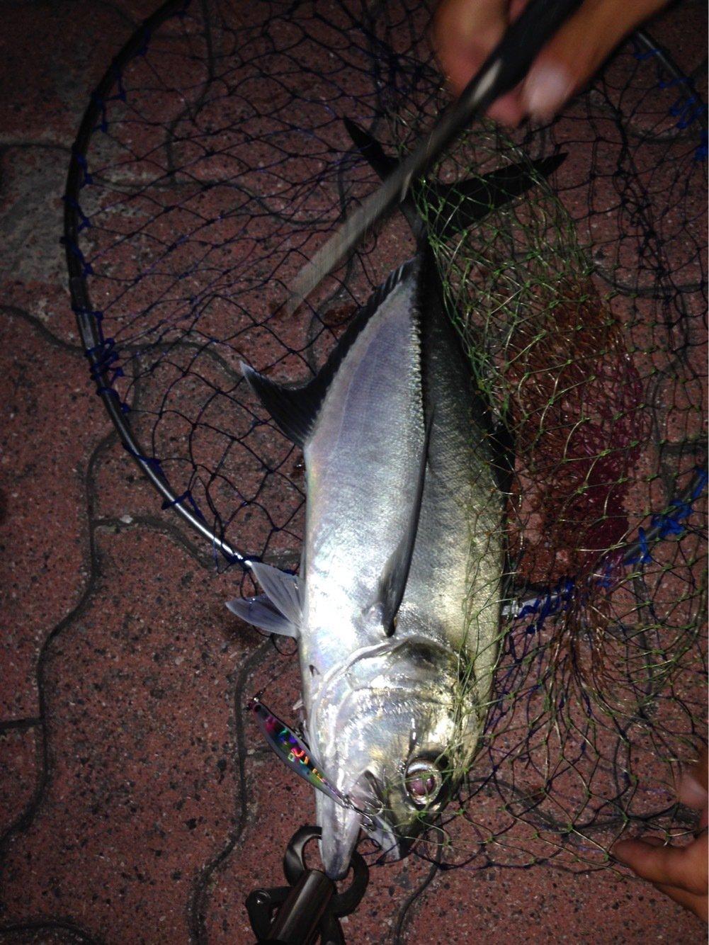 とーさんの投稿画像,写っている魚はギンガメアジ