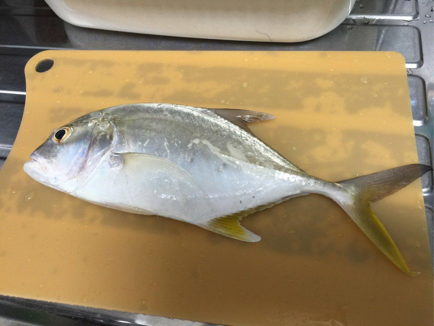 アロやんさんの投稿画像,写っている魚はロウニンアジ