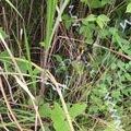cobraさんの京都府乙訓郡での釣果写真