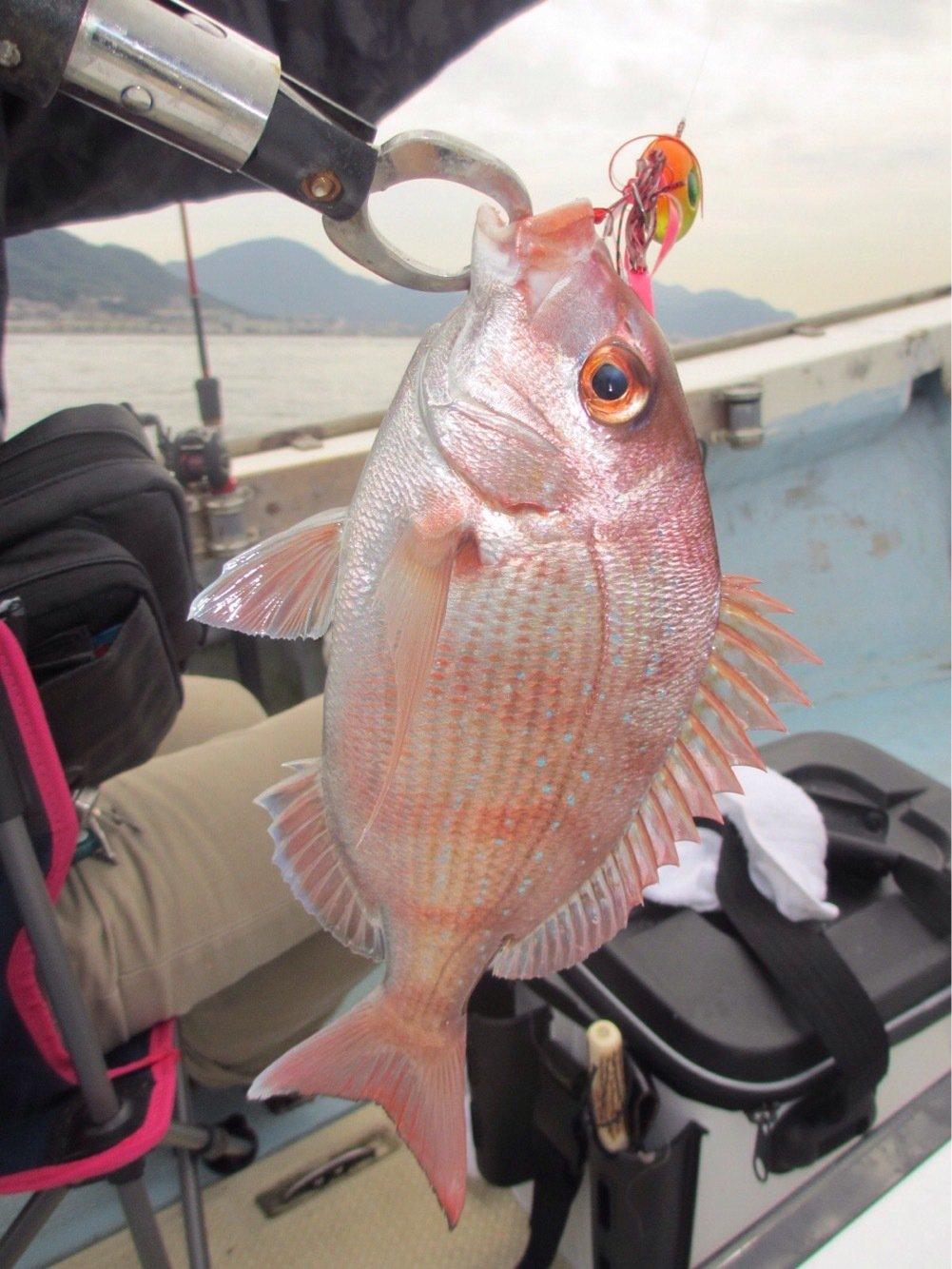 りょうさんの投稿画像,写っている魚はマダイ