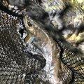 showwwww_1さんの山梨県北杜市での釣果写真