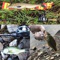 わかさんの滋賀県長浜市での釣果写真