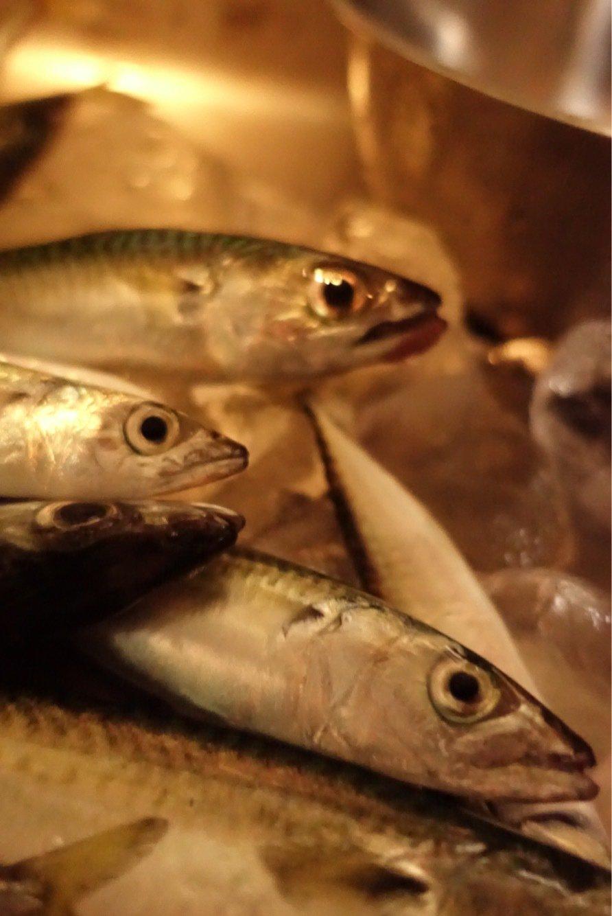 なはなは太郎さんの投稿画像,写っている魚は