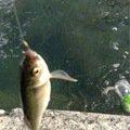 Georgeさんの福岡県八女郡での釣果写真