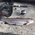 わたりょさんの長野県諏訪市での釣果写真
