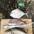 イワタカさんの長崎県長崎市でのマダイの釣果写真