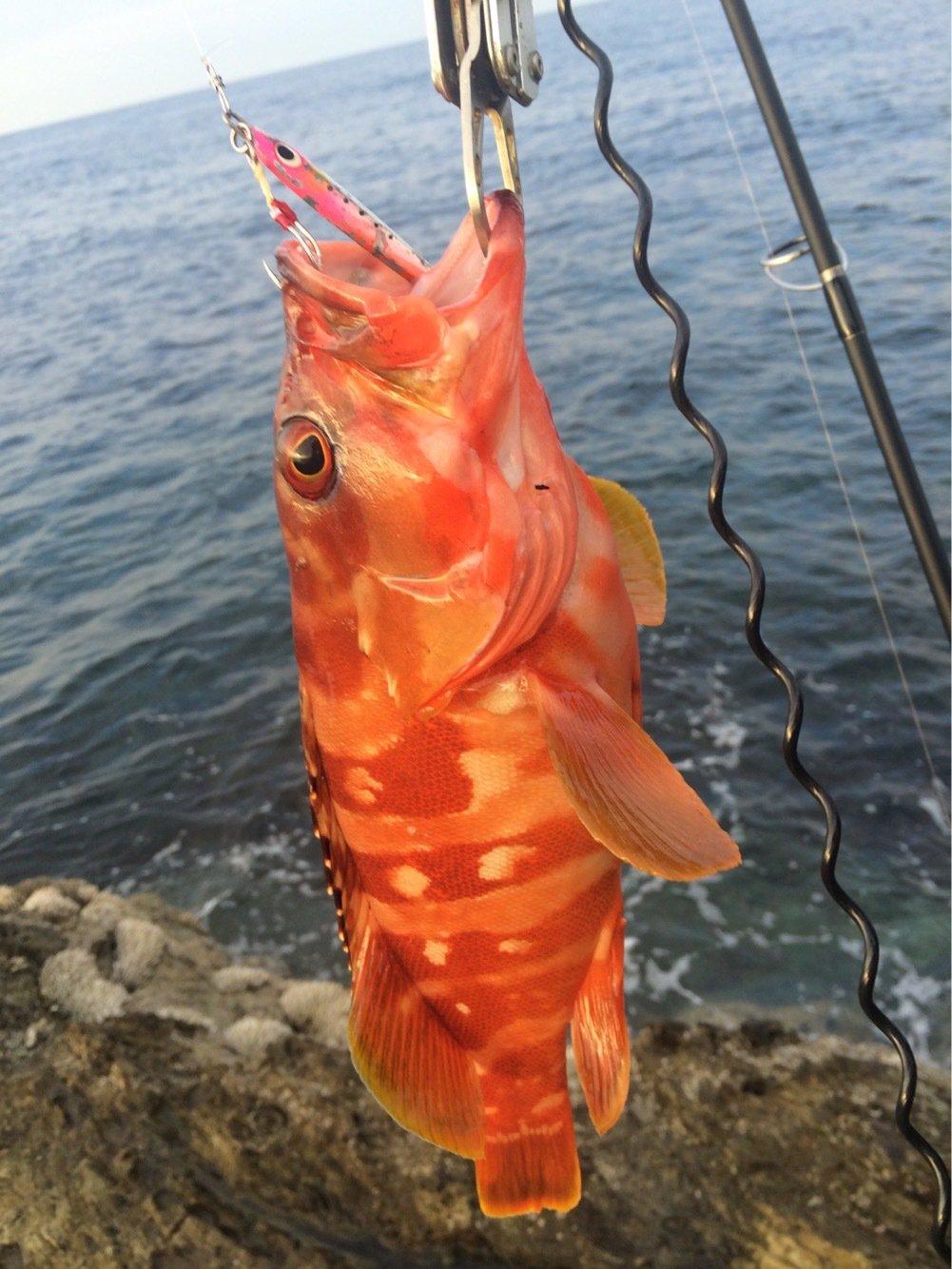 ジグ太郎さんの投稿画像,写っている魚はアカハタ
