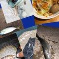 ゲゲゲのさんの茨城県小美玉市での釣果写真
