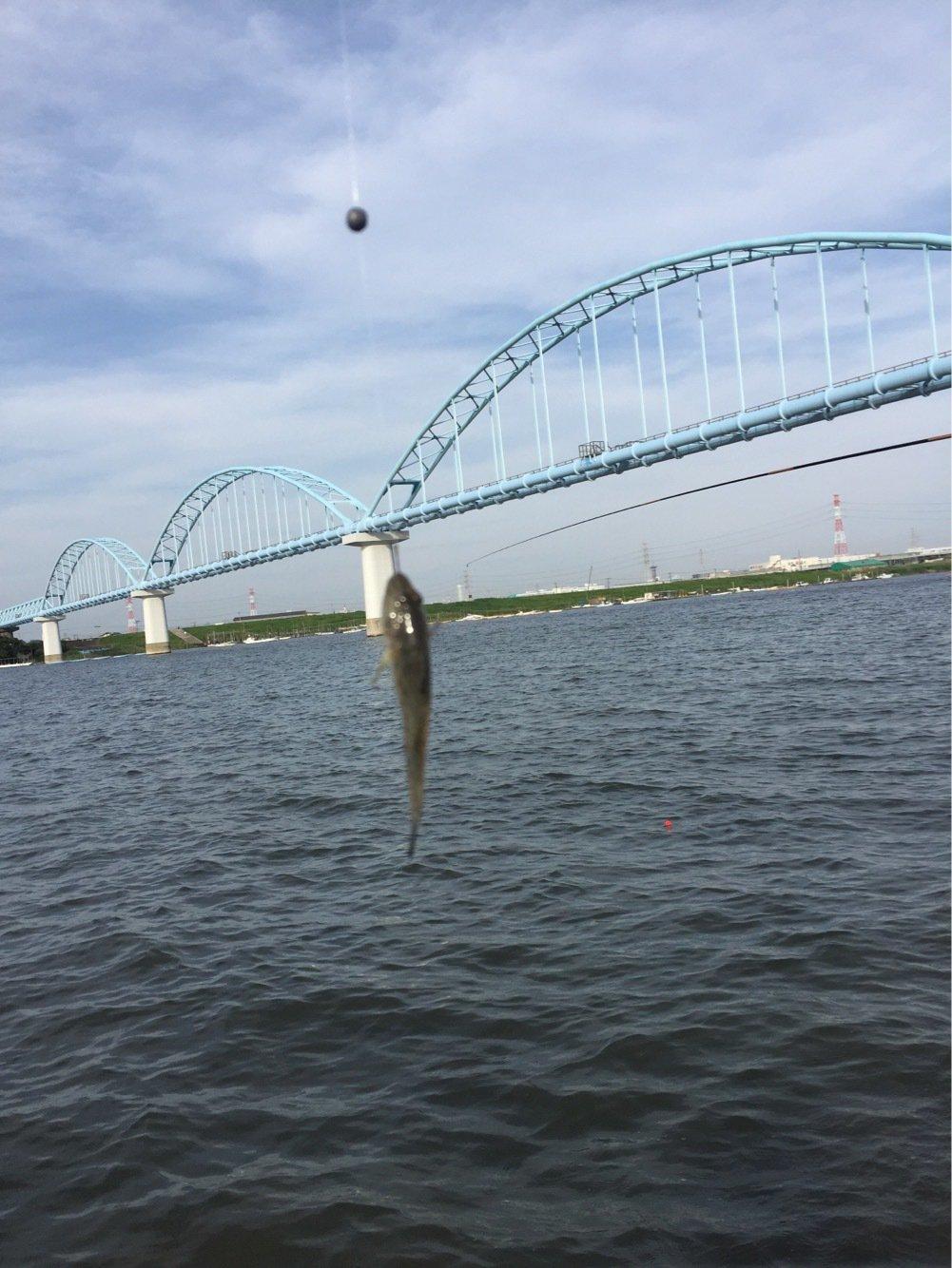 Anglerさんの投稿画像,写っている魚はマハゼ