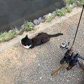 てつおTVさんの東京都稲城市でのニジマスの釣果写真