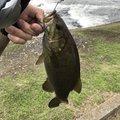 もえさんの埼玉県加須市での釣果写真
