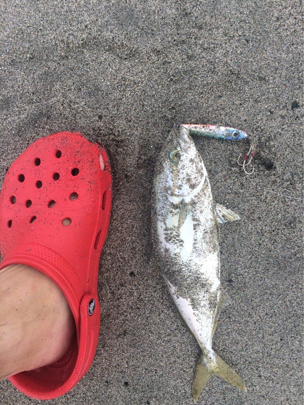 U1さんの投稿画像,写っている魚は