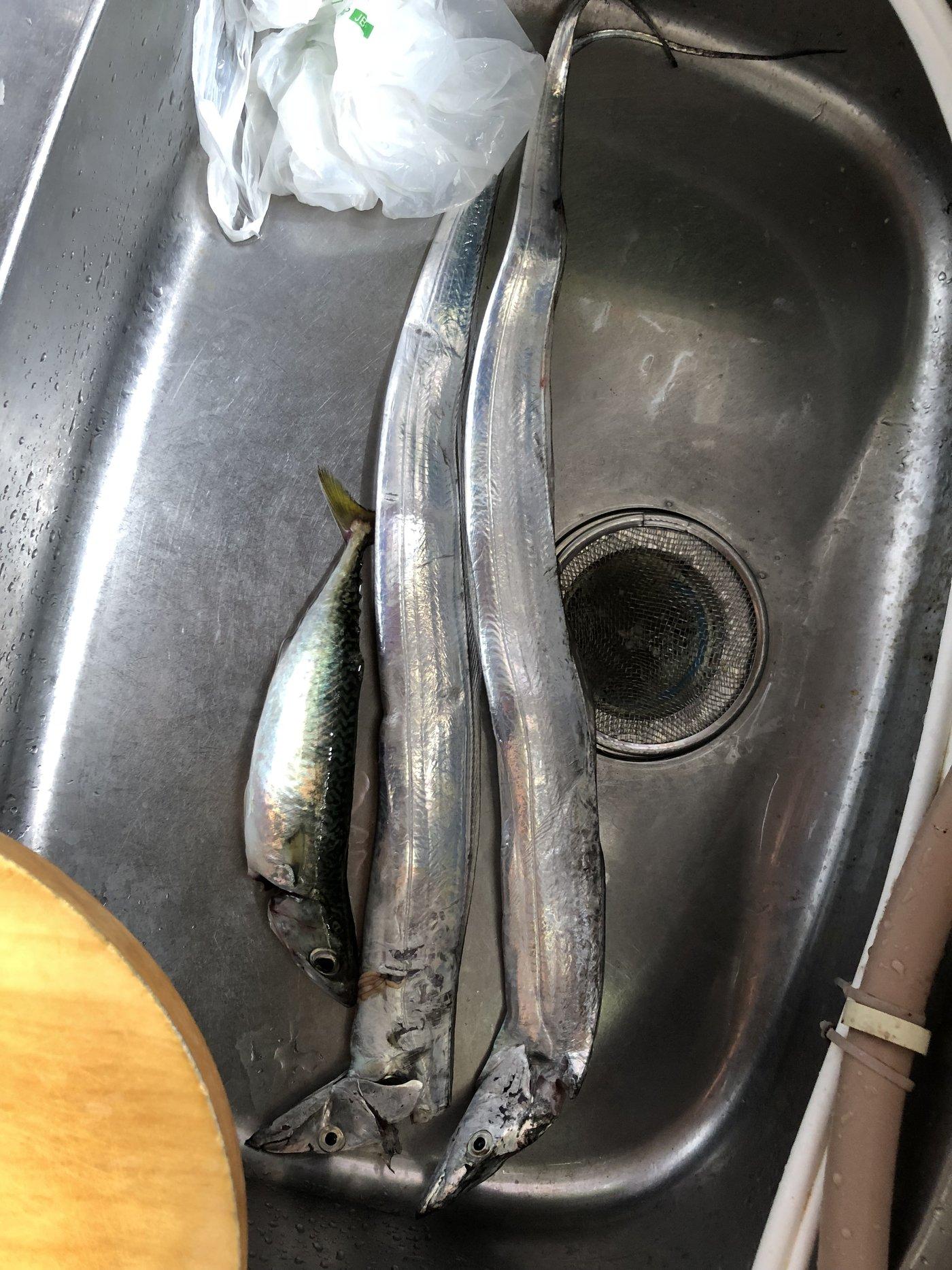 ふくなかさんの投稿画像,写っている魚はタチウオ,マサバ