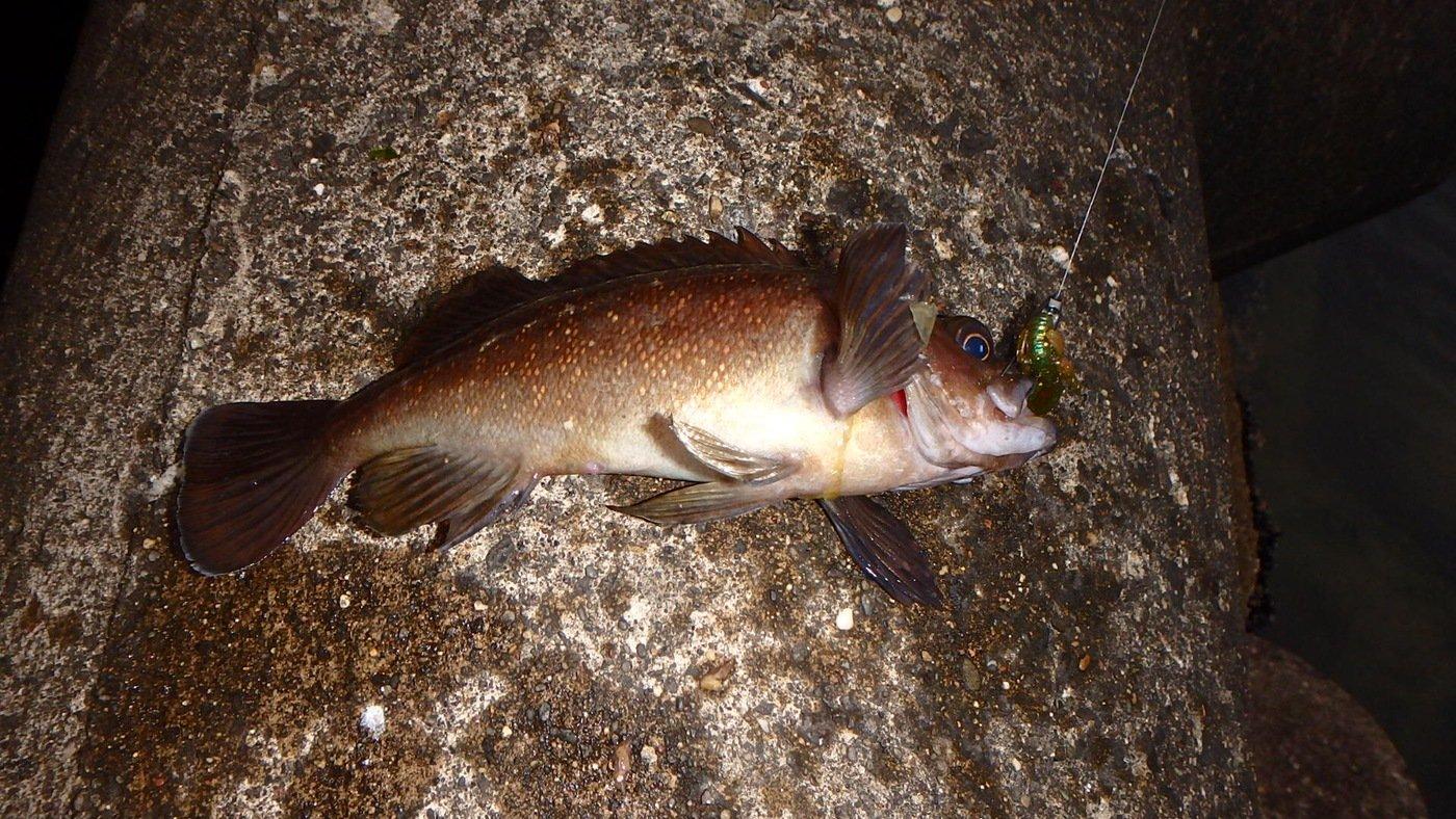 sugiさんの投稿画像,写っている魚はメバル