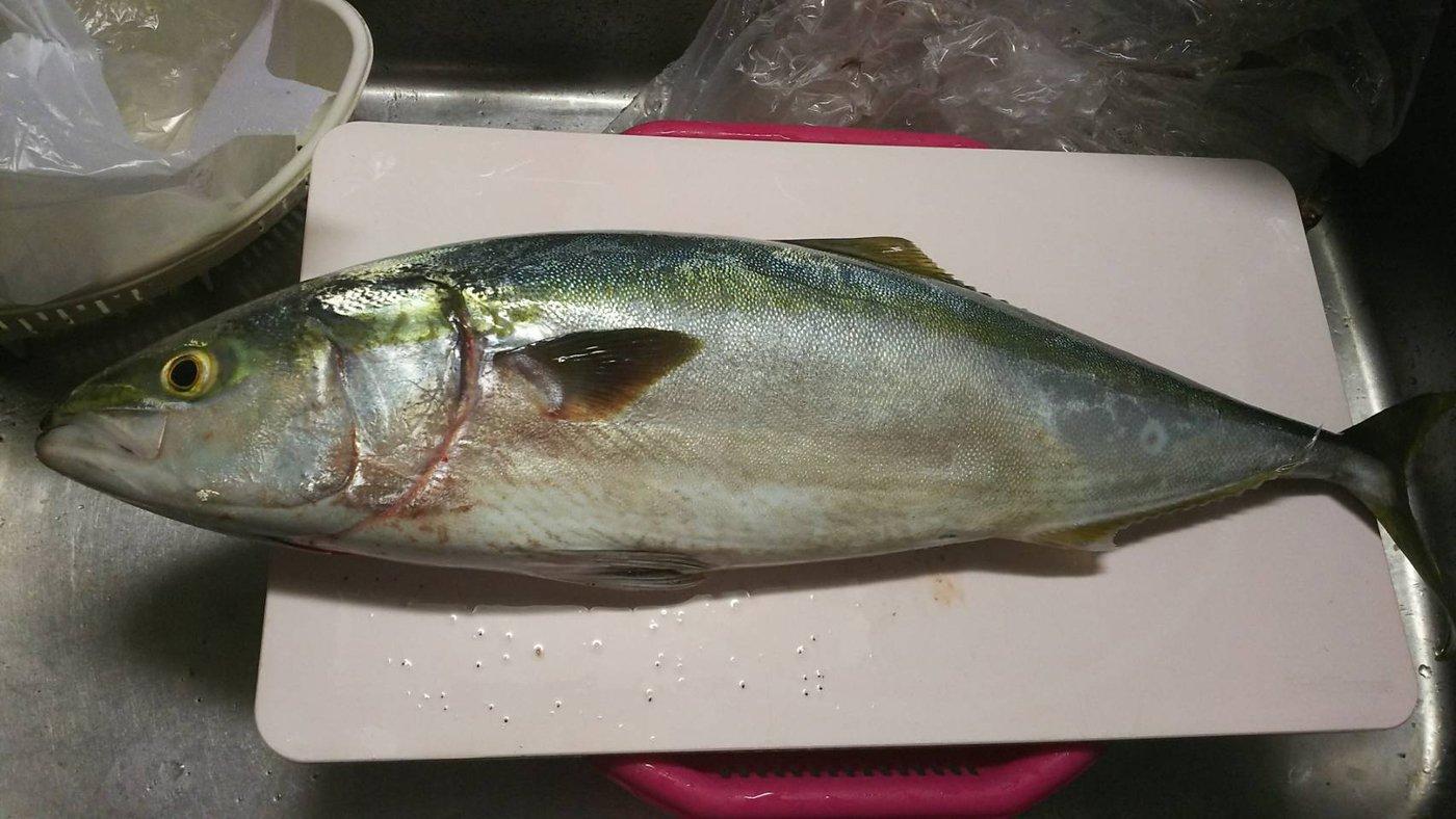 イライラマンさんの投稿画像,写っている魚はワラサ