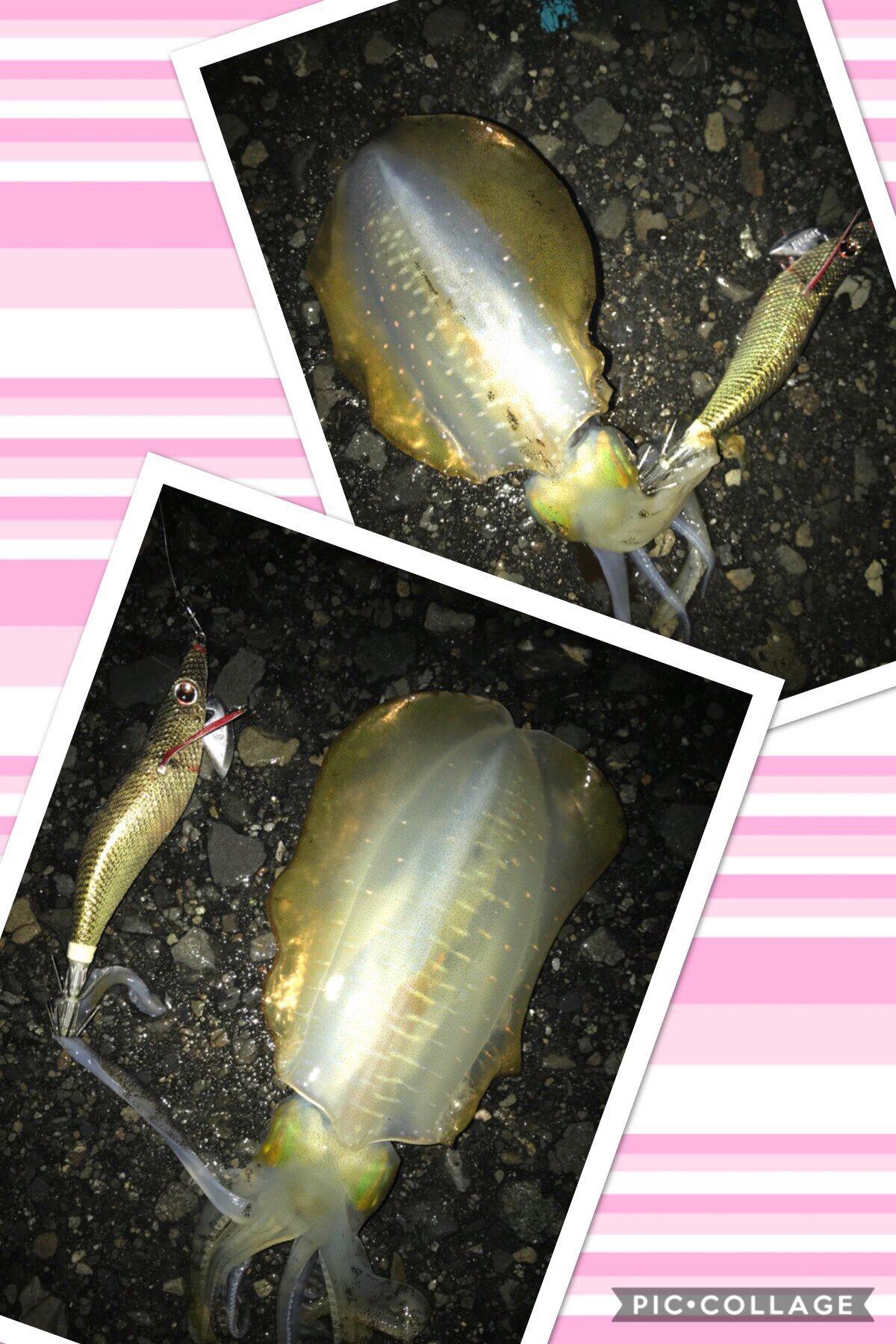 ☆mimi☆さんの投稿画像,写っている魚はアオリイカ