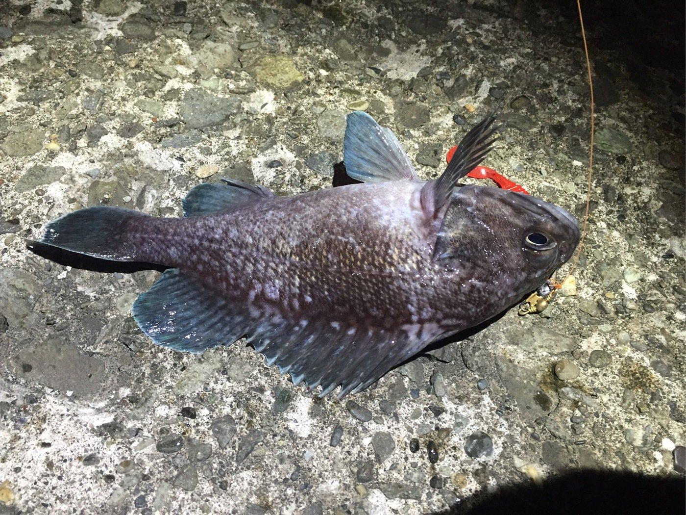 Kタさんの投稿画像,写っている魚はキツネメバル