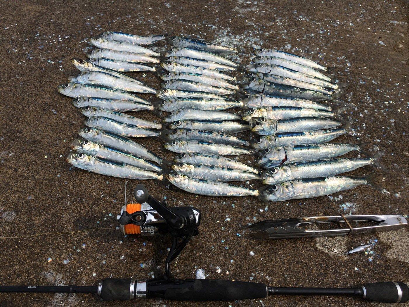 Murakameepさんの投稿画像,写っている魚はマイワシ