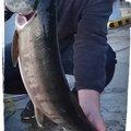 まるさんさんの北海道増毛郡での釣果写真